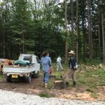 ドームハウス敷地内で伐採作業が開始