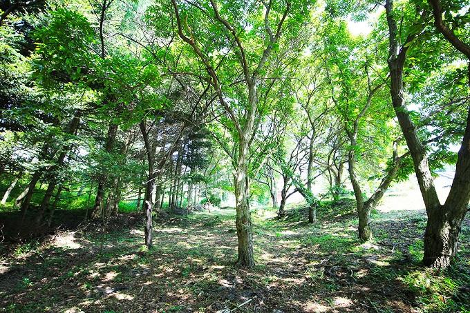 敷地内の森