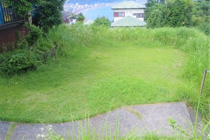 庭では家庭茶園もできます。