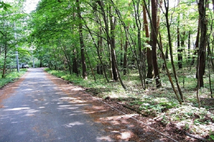 【Ⓐ区画】東側私道と敷地(写真右側)