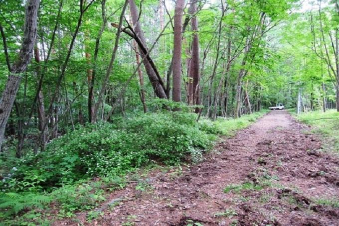 【Ⓐ区画】西側私道と敷地(写真左側)