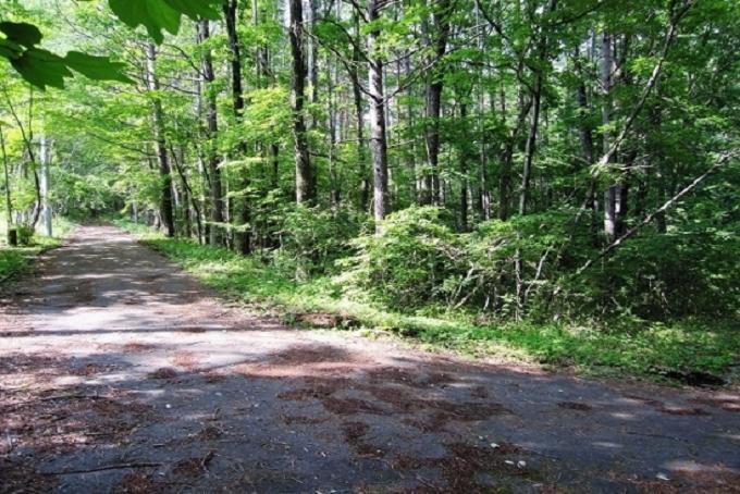 【Ⓑ区画】西側私道と敷地(写真右側)