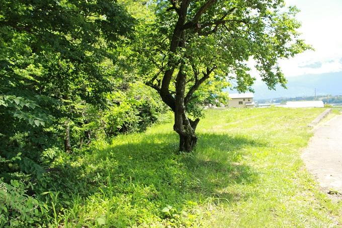 2713・2712北から撮影。梅の木があります