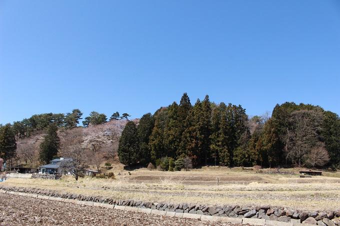 林の向こうは谷戸城跡