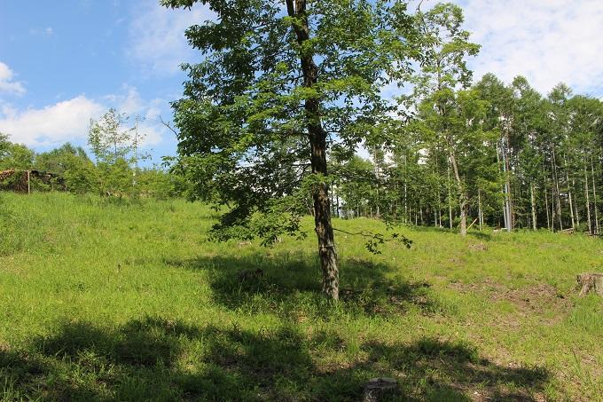 土地内の広葉樹